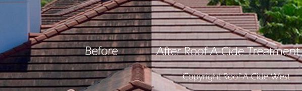 before and after Roof-A-Cide treatment